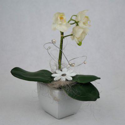 Seidenorchidee weiß